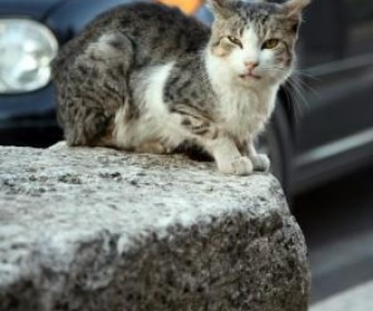 Stray Cats Rockabilly T Shirt Carl Perkins Jerry Lee Lewis Eddie Cochran Rétro